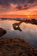 Red sky, sea, beach, sunset, dog iPhone wallpaper