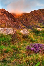 Snowdonia, mountains, rocks, flowers, slope, grass iPhone wallpaper