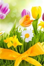 Spring, flowers, colorful tulips iPhone wallpaper