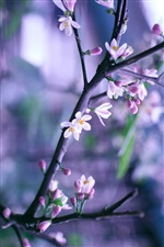 Spring pink flowers in full bloom, bokeh iPhone wallpaper