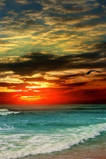 Sunset beach, sea, shore, tropical, bird iPhone wallpaper
