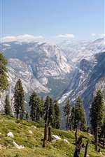 Yosemite National Park, California, USA, trees, mountains iPhone wallpaper