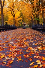 Autumn, park, path, trees, bench iPhone Wallpaper