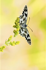 Black butterfly, bokeh, little flowers iPhone wallpaper