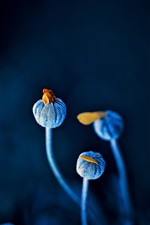 Blue flowers, buds, black background iPhone wallpaper