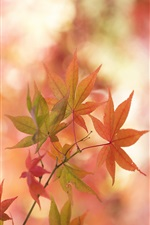 Maple leaves close-up, autumn iPhone wallpaper