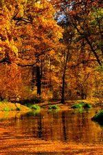 Park, trees, autumn, pond, yellow leaves iPhone Wallpaper