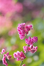Pink flowers bloom, blur background iPhone wallpaper