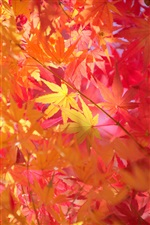Red maple leaves macro, autumn iPhone wallpaper