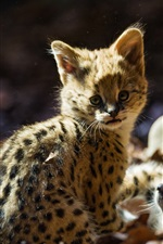 Serval cat, kitten iPhone Wallpaper