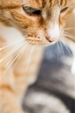Cat macro photography, whiskers iPhone wallpaper