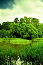 Nature scenery, green, pond, grass, trees, dusk iPhone Wallpaper
