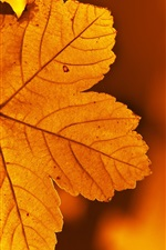 Red leaf macro photography, autumn iPhone wallpaper