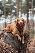 Dog rest on stump iPhone Wallpaper