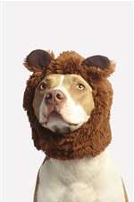 Funny animals, dog, hat iPhone wallpaper