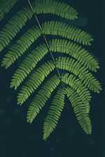 Green leaves, black background iPhone wallpaper
