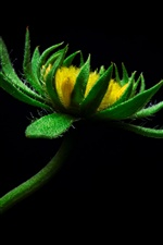 Green petals flower, black background iPhone Wallpaper