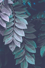 Many leaves, water drops iPhone wallpaper