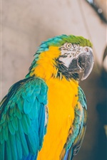 Parrot, macaw iPhone Wallpaper