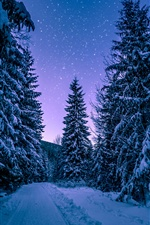 Winter, forest, trees, snow, starry iPhone Wallpaper