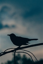 Bird, silhouette, dusk iPhone Wallpaper
