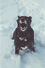 Black dog open mouth, winter, snow iPhone Wallpaper