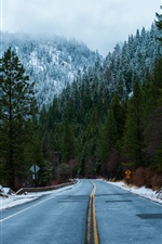 Forest, road, sign, snow, winter iPhone wallpaper