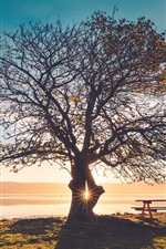 Lonely tree, bench, sunset iPhone wallpaper