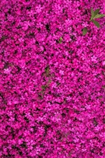 Multitude pink flowers bloom iPhone wallpaper