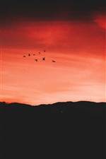Night, sunset, red sky, birds flight iPhone wallpaper