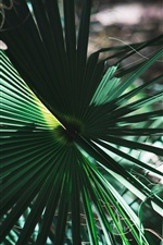 Palm leaves iPhone wallpaper