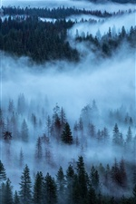 Trees, forest, fog iPhone wallpaper