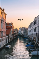 Venice, Italy, canal, houses, flying bird iPhone wallpaper