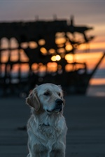 Dog, beach, sea, sunset iPhone wallpaper
