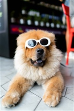 Dog, sunglasses, funny animal iPhone wallpaper