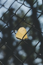 Fence, yellow leaf iPhone wallpaper