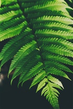Fern green leaves iPhone wallpaper