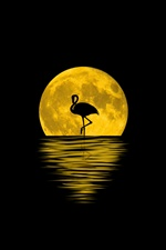 Flamingo, night, moon, silhouette, water iPhone wallpaper