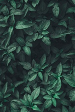 Green leaves, plants iPhone wallpaper