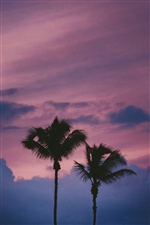Palm trees, night, sky iPhone wallpaper
