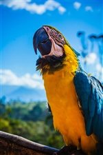 Parrot, blue feathers, macaw iPhone wallpaper