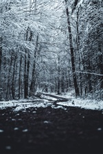 Winter, trees, snow, path iPhone Wallpaper