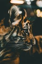 Cute tiger cub iPhone wallpaper
