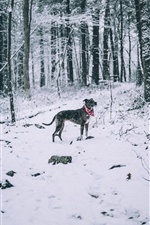 Dog in winter, scarf, snow, trees iPhone wallpaper