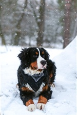 Dog, snow, winter iPhone Wallpaper