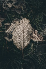 Dry leaf, frost iPhone wallpaper
