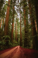 Forest, trees, road, nature iPhone wallpaper