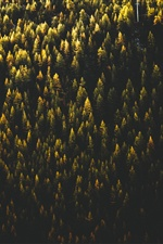 Forest, trees, top view, autumn iPhone Wallpaper