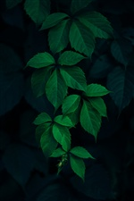 Green leaves, darkness iPhone wallpaper