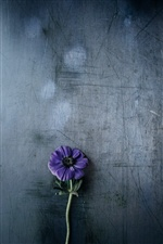Purple flower, gray background iPhone wallpaper